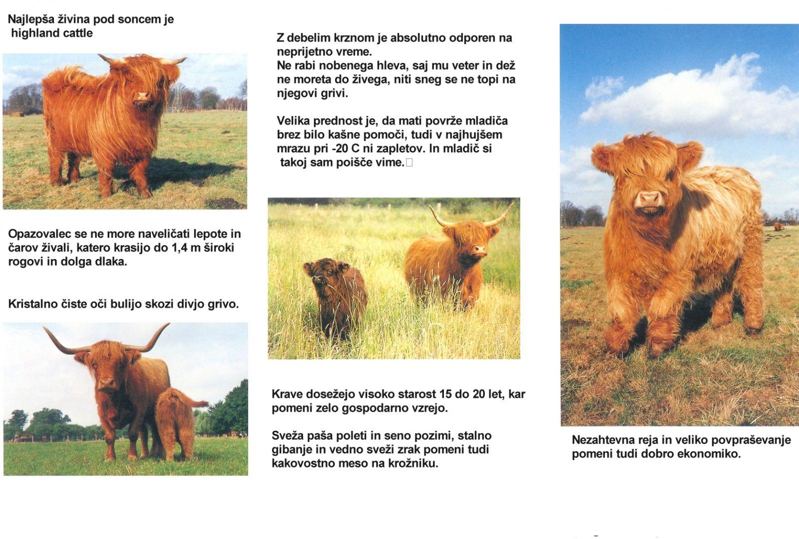 ekoloska-kmetija-rengeo